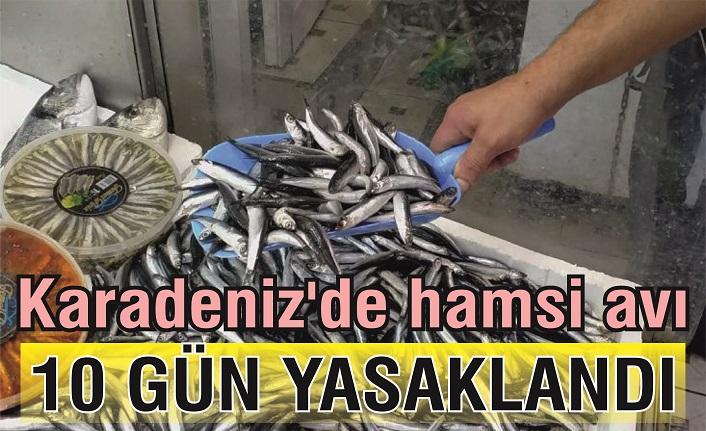 Son dakika...  Karadeniz'de hamsi avı 10 gün yasak!