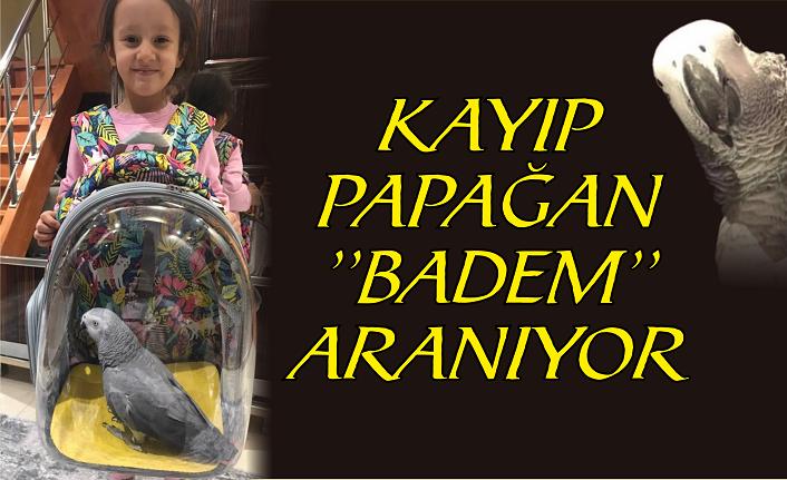 Evden kaçan ''Badem'' aranıyor!