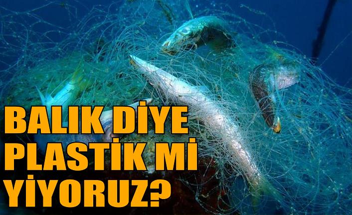 Marmara ve Karadeniz'de yapılan araştırmanın sonuçları dehşet verici!