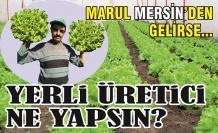 Marul Mersin'den gelirse yerli üretici ne yapsın?