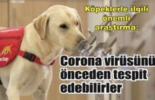 Köpeklerle ilgili önemli araştırma: Corona virüsünü...