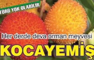 Her derde deva bir orman meyvesi: Kocayemiş…