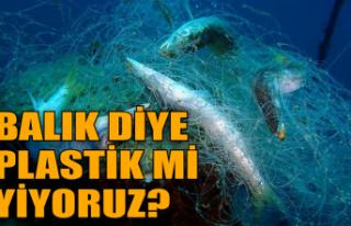 Marmara ve Karadeniz'de yapılan araştırmanın...